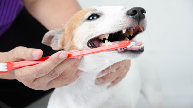 pet dental hygiene tips from we talk pets in upland ca